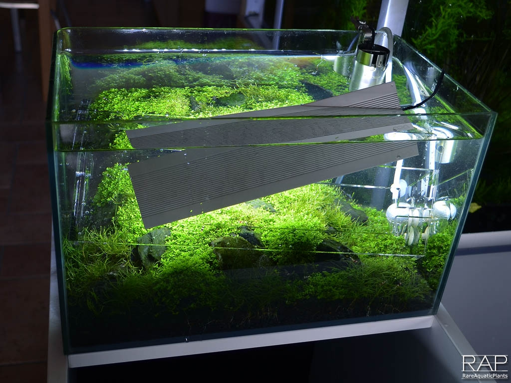 23 ADA Aquasky 361 iannella massimo rareaquaticplants led nautre aquarium illumination illuminazione