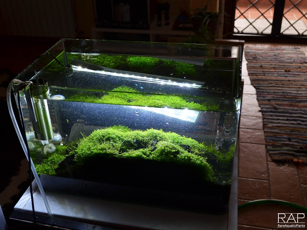 24 ADA Aquasky 361 iannella massimo rareaquaticplants led nautre aquarium illumination illuminazione