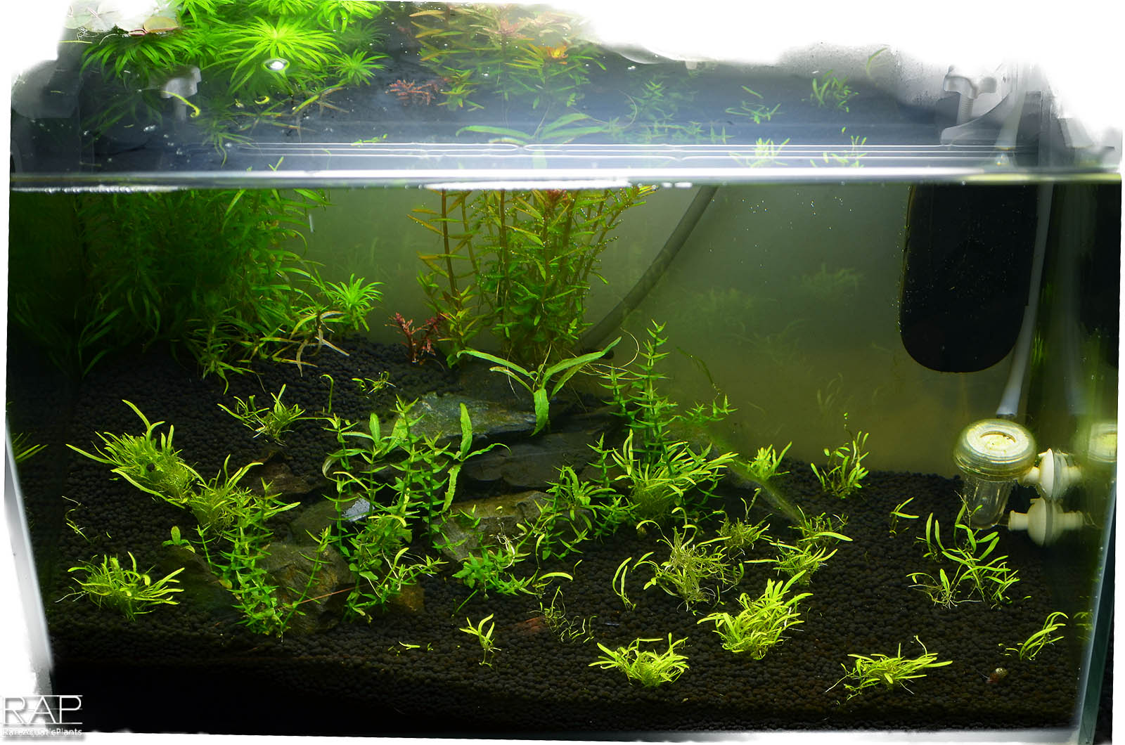 23 Absolute tropica aquarium soil