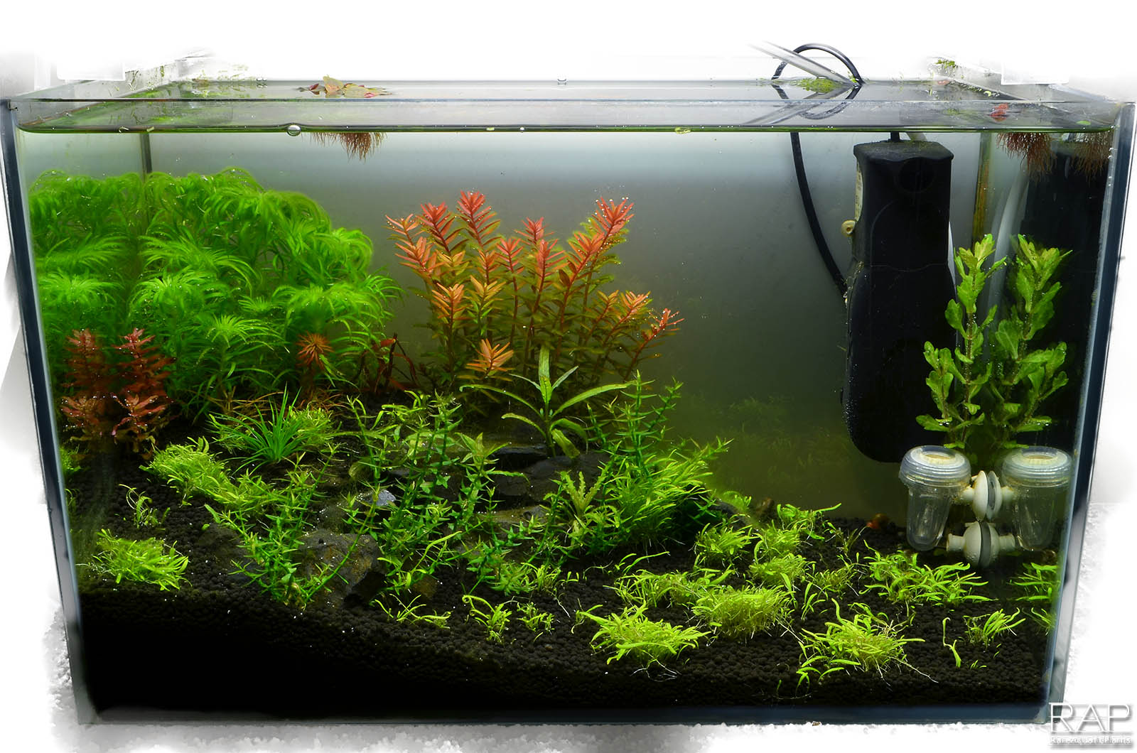 24 Absolute tropica aquarium soil