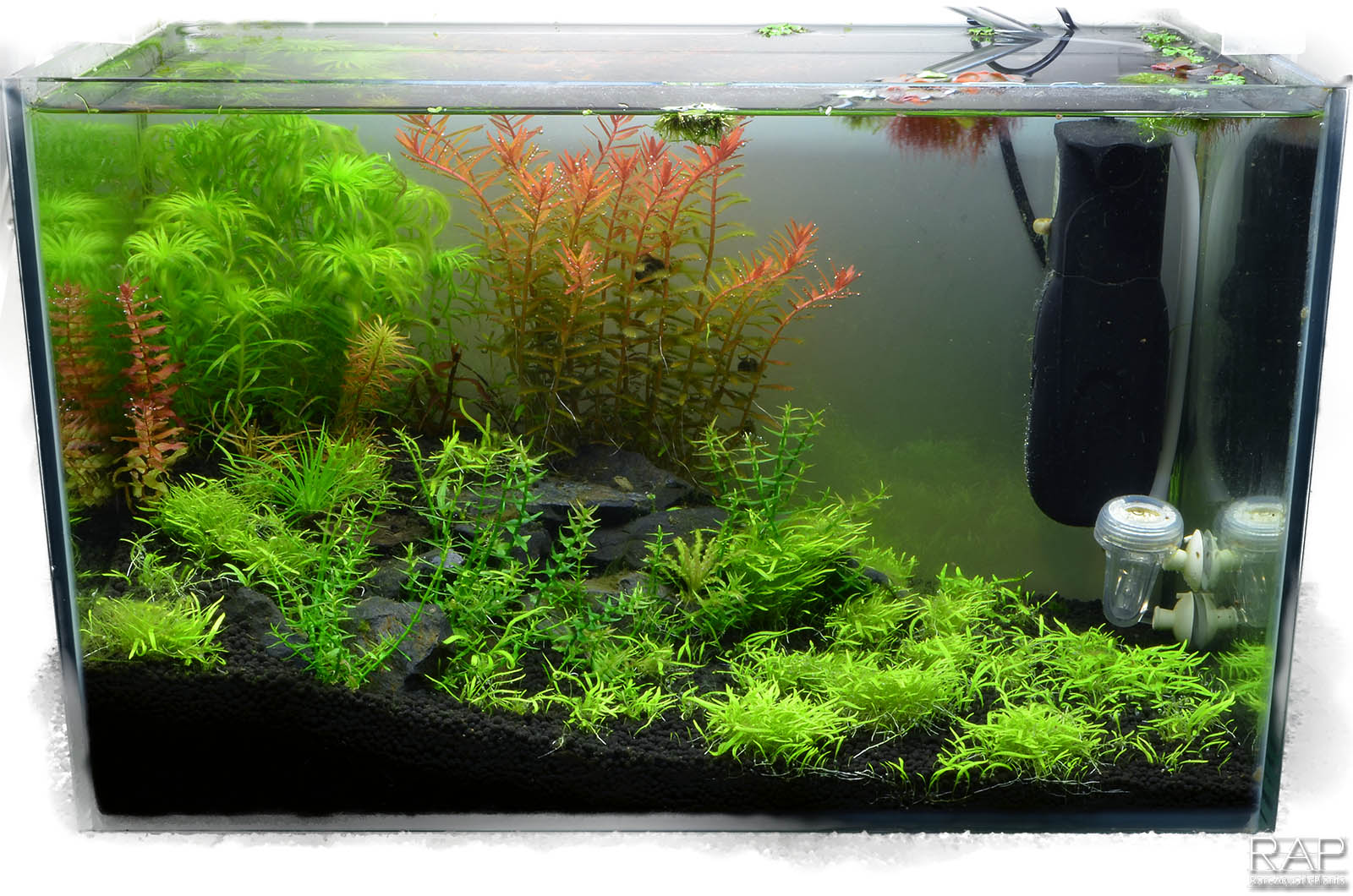 29 Absolute tropica aquarium soil