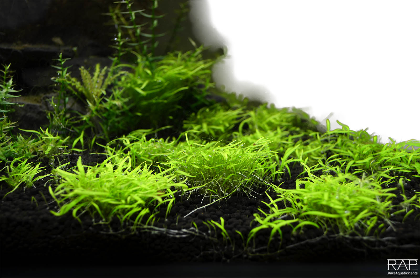 31 Absolute tropica aquarium soil