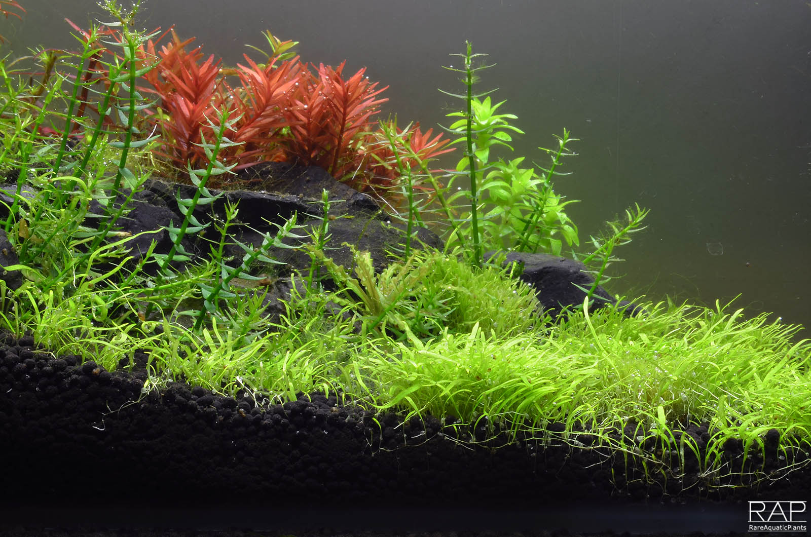 32 Absolute tropica aquarium soil