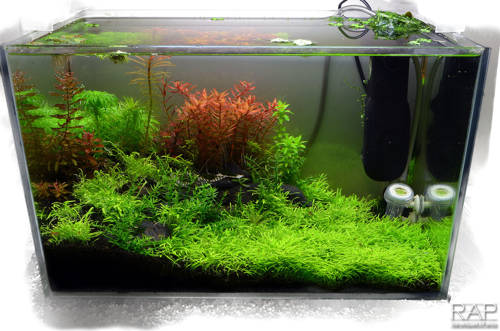 34 Absolute tropica aquarium soil