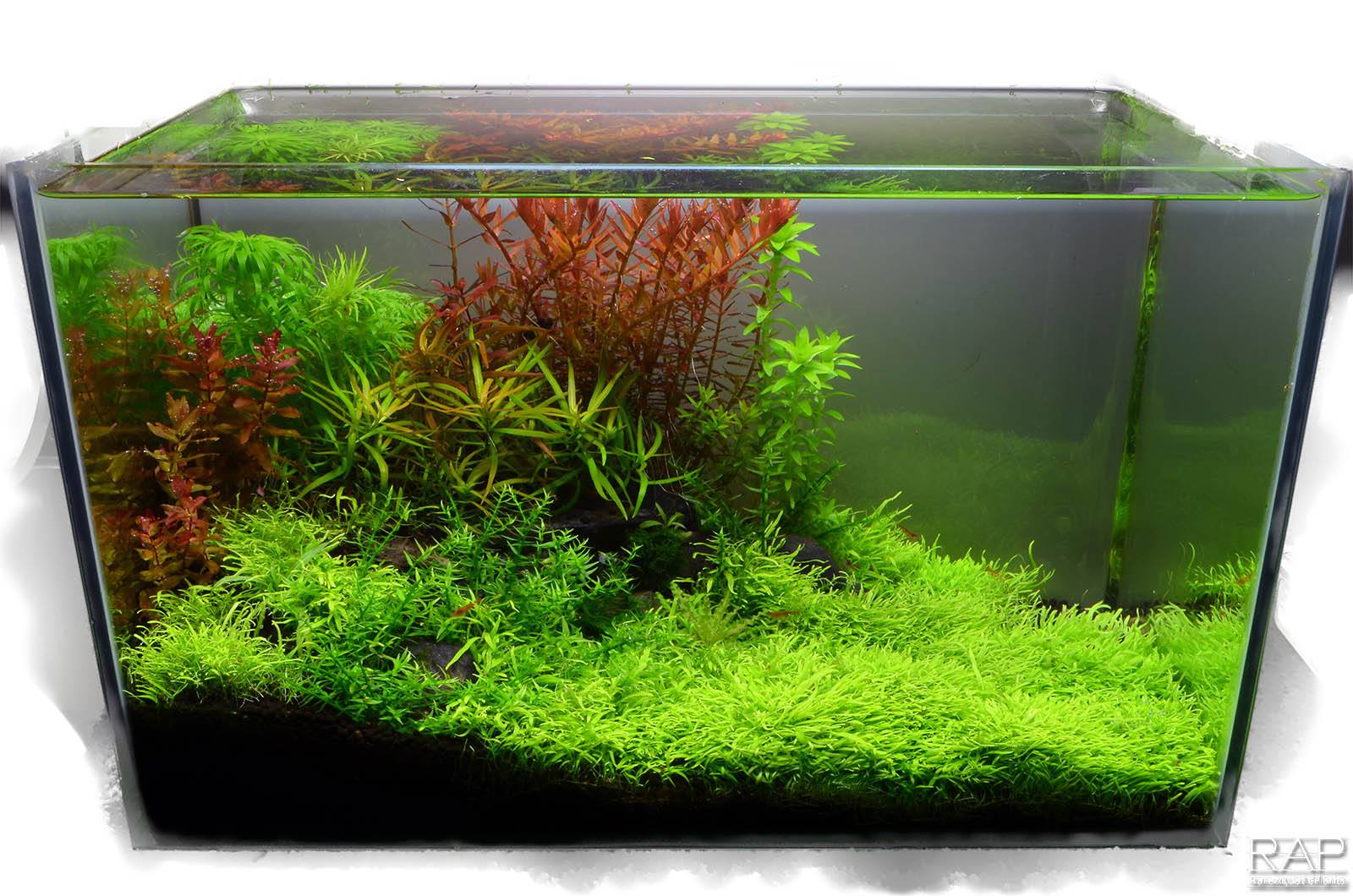 40 Absolute tropica aquarium soil