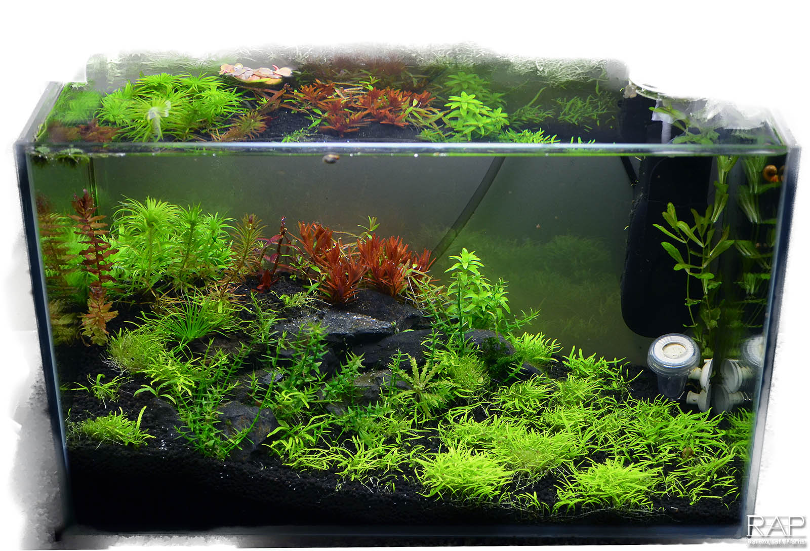 Absolute tropica aquarium soil